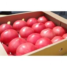期間限定 真っ赤なトマト3kg~3.5kg