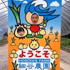 千葉県 白子産たまねぎ狩り体験(1グループ10kg)