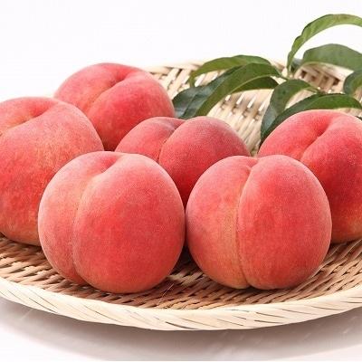【果物王国 山形】たっぷり8回! さがえ産フルーツあじわい定期便 <満喫セット> 080-B01