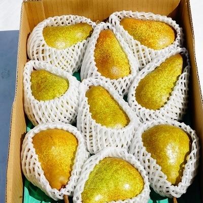西洋梨(オーロラ)3kg ご家庭用 0012-2009