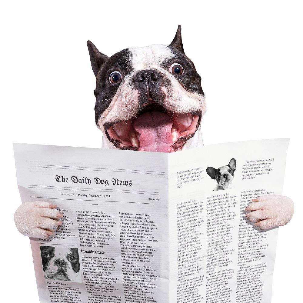 新聞 お得な取り方