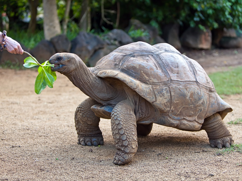 ガラパゴス諸島の亀