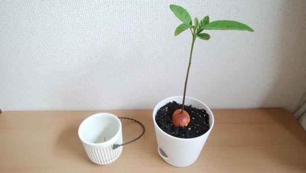 我が家の植木鉢