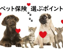 ペット保険選ぶポイント