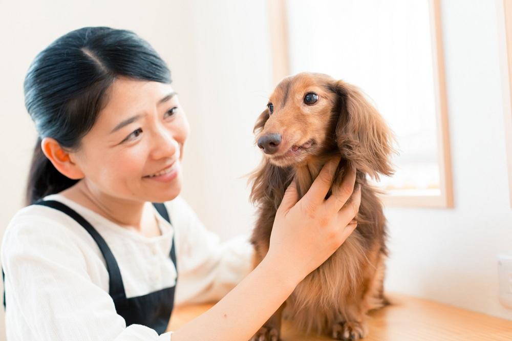 ペットシッターは、飼い主に代わってペットの散歩や餌やりなどをするお仕事