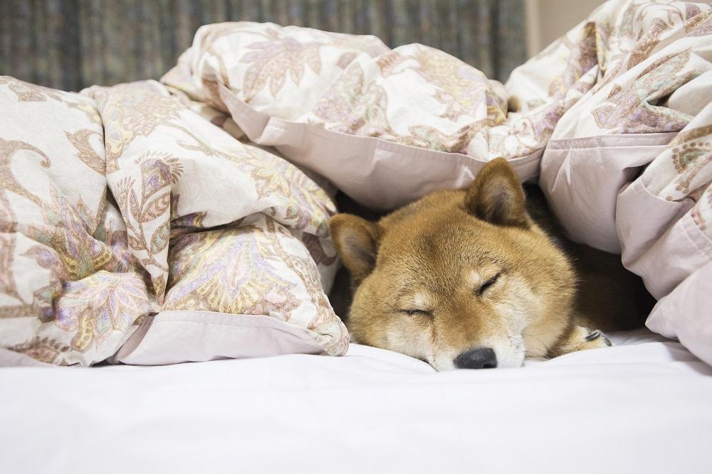 上質な寝具で上質な睡眠