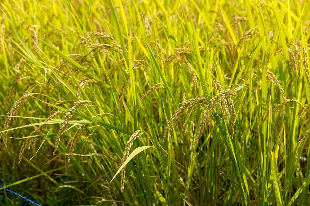 検地で米の収穫高が定められた。