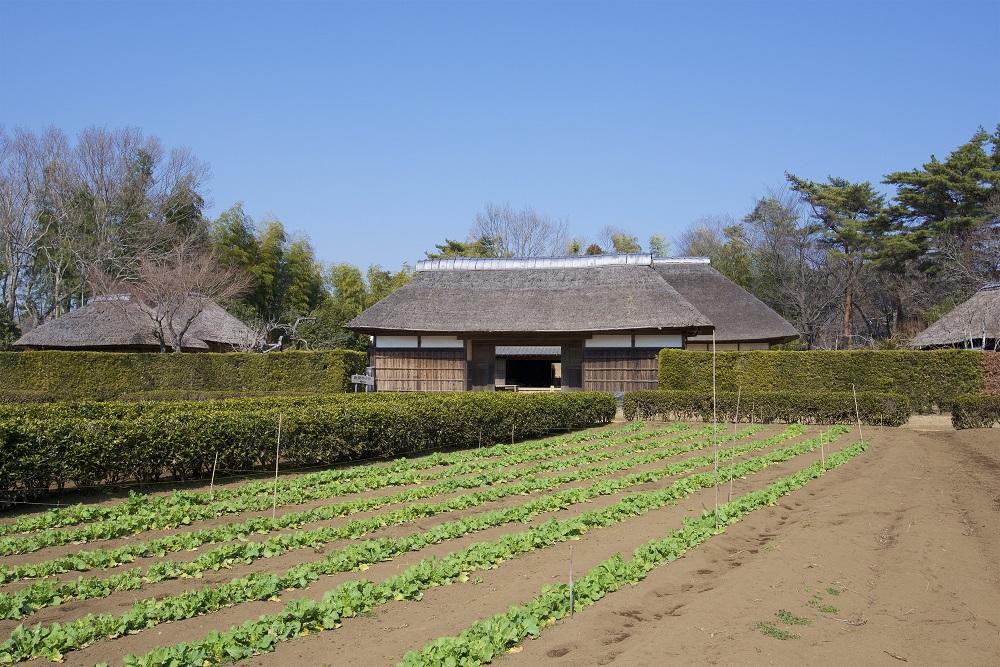 江戸時代は、農民が主な納税者
